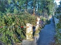 Baumfällarbeiten wegen nicht mehr vorhandener Standfestigtkeit
